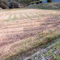 やっと、山の田圃の稲刈りが終わりました