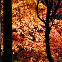 『城山紅葉』 竹の道