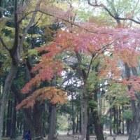晩秋の井の頭公園