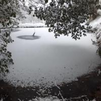 畑と池の雪