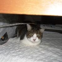 安眠妨害をする猫