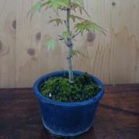 鉢植え 2