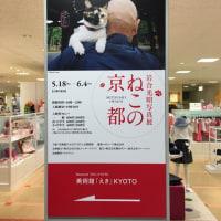 「岩合光昭写真展 ~ ねこの京都」(美術館えきKYOTO)