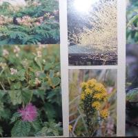 花の写真の整理(長女の遺影前に飾る)