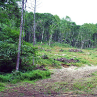 萩の里自然公園 エコウォーク 第3回 雑木林再生の様子を見てみよう!
