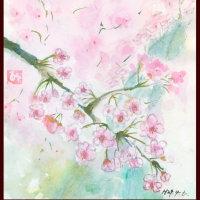 まってた桜の開花只今7分咲き~