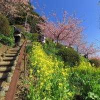 松田桜まつり・瀬戸屋敷