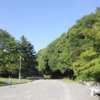 岡崎、平安神宮、京都御所、サイクリングデー♪