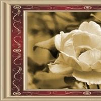 平成28年10月23日(日)の父の薔薇