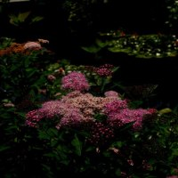 『食と緑の空中庭園』の花々