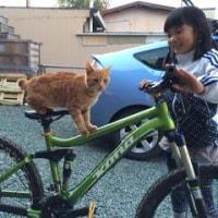 迷い猫@作手 新城 愛知