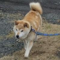 【続報】根室市・飼い主募集の犬たち