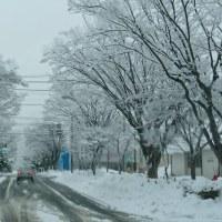 真冬の部活弁な朝♪