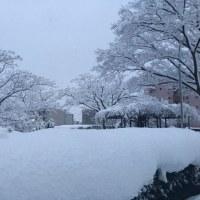 雪、ユキ、ゆき!!