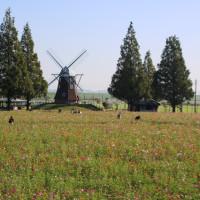 柏市 あけぼの山農業公園を歩く(10月15日)