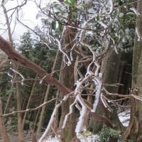樹氷はどうかな、綿向山