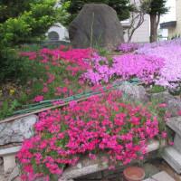 5月22日の庭