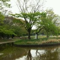 新緑輝く葉桜も美しい代々木公園