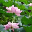 今年も紫竹院公園