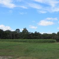米国『地域支援によって成り立つオーガニック農場』事情