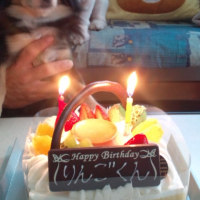 犬の誕生日www