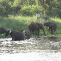 ザンベジ川クルージング(南アフリカ旅行・1)
