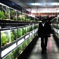 「冷たい熱帯魚」