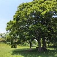 日曜日のお昼 城址公園の木陰で過ごす