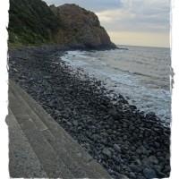 海岸のノブドウ