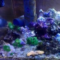 買取り 海水魚 サンゴ