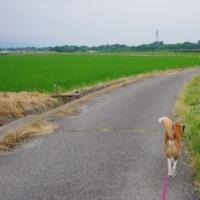 ちょい長めのお散歩