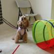 7月24日(月)…ナーサリー(犬の保育園)&SNSパソコン教室