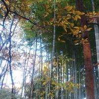 狛江の森に