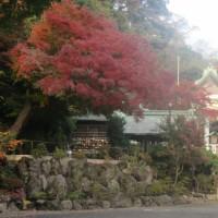 かまくらもみじ(10)鎌倉宮から瑞泉寺