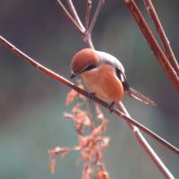 雨上がりを期待し 山にでも期待の小鳥には会えず・・・・・(・_・、