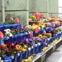 1・2年生が育てた花で学校の裏庭はお花畑