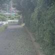 道路脇の除草。