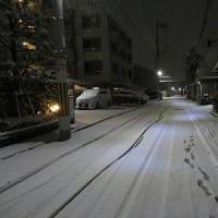 雪、雪、雪、、、