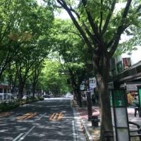 昨日の仙台観光
