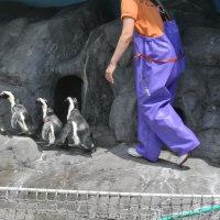 ペンギン飼育員さんのファッション・1