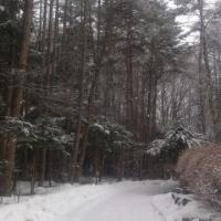 蓼科山荘より 再び降雪 2