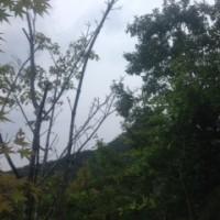 樹木治療へ