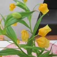 今週のお花サンダーソニア