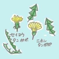 たんぽぽの若い葉
