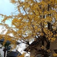 秋が深まっていきます