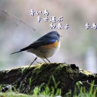青い鳥幸せ運ぶ初春よ