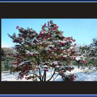 雪見の花々