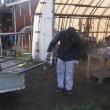 サトイモ収穫用の棚を作成