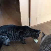 餅を食べる猫