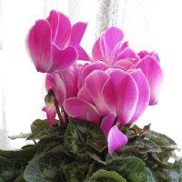 この花を見ると・・・・・・!